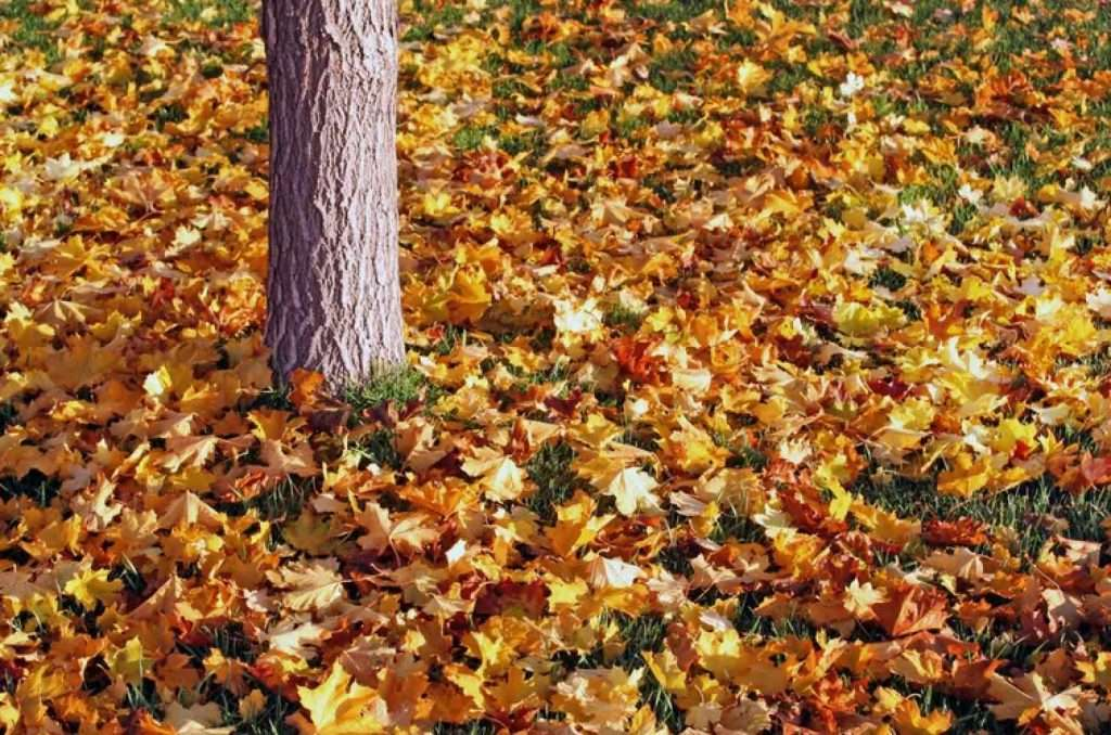 Fall leaves covering the ground and a tree trunk